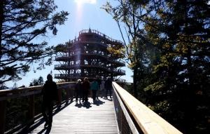 Wieża widokowa w koronach drzew